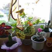 moje kuchenne kwiatki