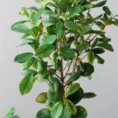 moje drzewko - potrzebna pomoc w identyfikacji :)