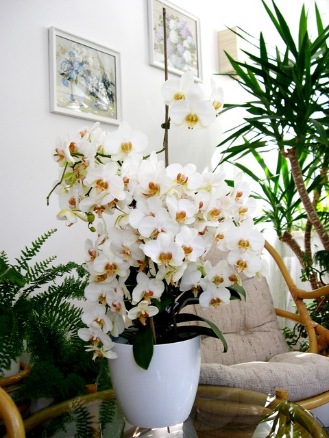Zobacz Temat Kwiaty Doniczkowe W Domu