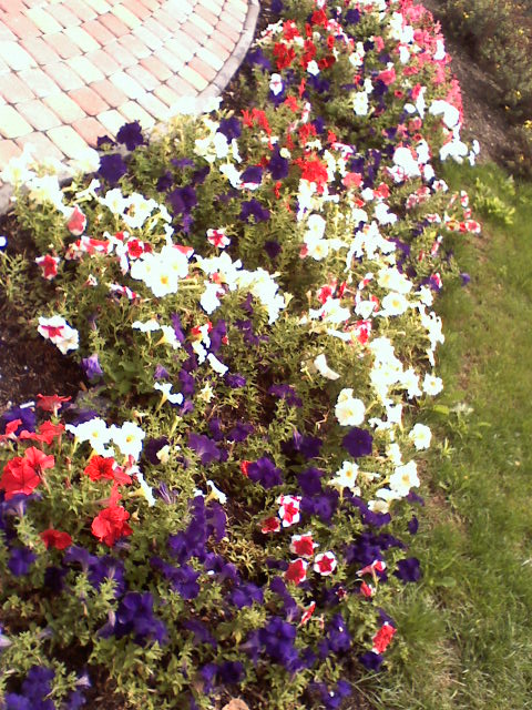 Kwiatowe klomby