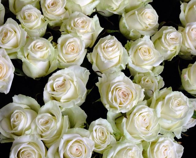 Dla tych co lubią róże...