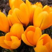 W wiosennym nastroju....