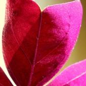 purpurowe serce ;)