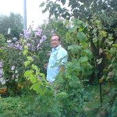 Ketmia-Hibiskus syryjski-jeden z wielu jakie są w moim ogrodzie.