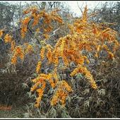 Korale pomarańczowe listopadowe