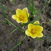 Wiosna 2011
