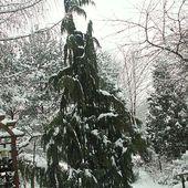 Miłego dnia z zimowym