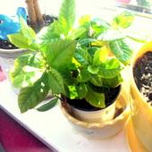 Gardenia:)