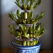 bambusowisko :)