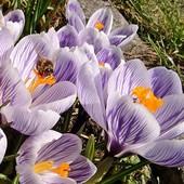 Wiosny ciąg dalszy