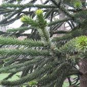 Zielenszy odcien zieleni ;-))