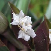 kolejny kwiatuszek reo