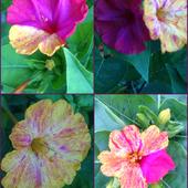 Dziwaczne, ale ładne kwiatki