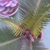 czupryna rośnie ;)