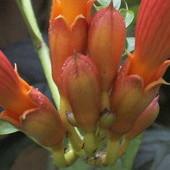 Jeden z pierwszych kwiatów.