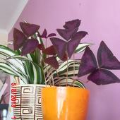 MIX roślinek :)