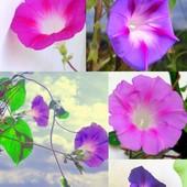 Przedpołudniowe kwiaty