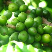 Kawa owoce