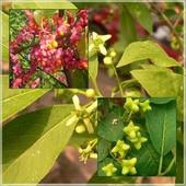 Od kwiatu po owoce