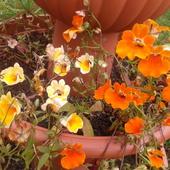 Trochę lata jesienią