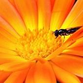 Energetyczny kwiatuszek!!!