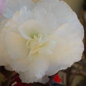 W bieli:)