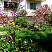 mój ogródek.......