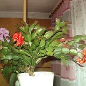 Grudnik ostatnie kwiaty