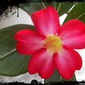 kwitnie wytrwale