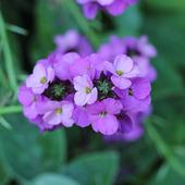 Kwiaty miesięcznicy
