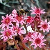 rojnikowe kwiaty