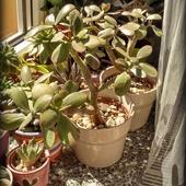 Rośniemy sobie na słoneczku :)