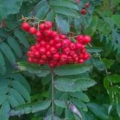 Czerwone korale:)