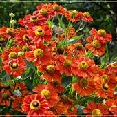 Energetycznymi  kwiatami...