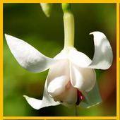takie kwiatki:)