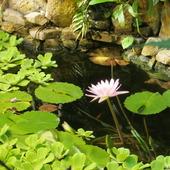 Lilia z ogrodu botanicznego