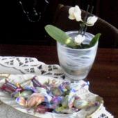 Mini storczyk,