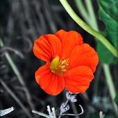 Pomarańczko :-)