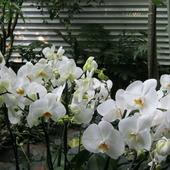 Storczyk z ogrodu botanicznego