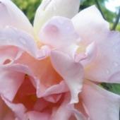 Troche rozanego rozu  na dobry sen:))