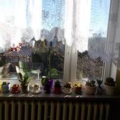 Okno storczykowo-kaktusowe :)