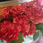 Walentykowe róże