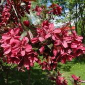 Piekne kwieciwitam wiosennie