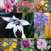 Kwiaty na moim balkonie..