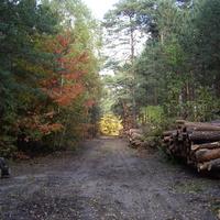 W lesie na spacerze