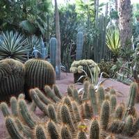 1,5m średnica 1 kuli kaktusa