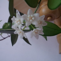 Kwiaty Thomsonii