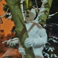 a na drzewa zima...już na stałe