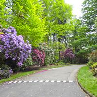 Miejskie ogrody