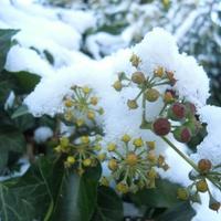 śniegowo>>>>